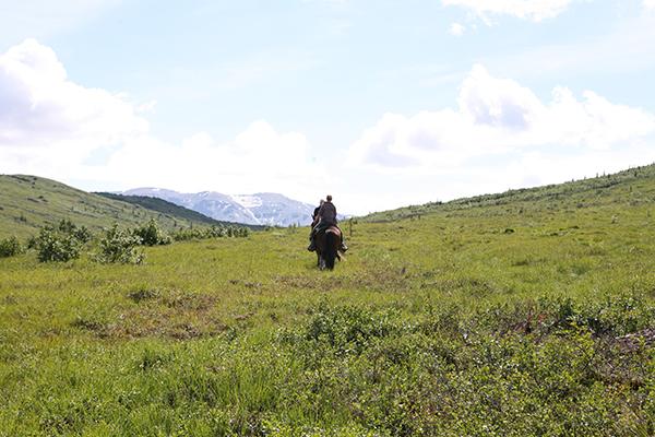 denali alaska horseback riding
