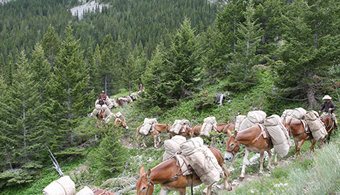 pack trips in Bob Marshall Wilderness Montana