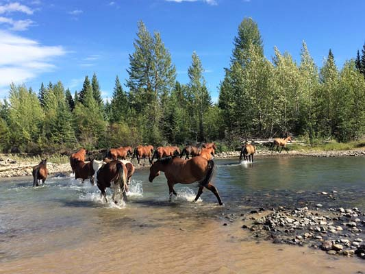 Big Creek Lodge British Columbia Horseback Riding Holidays