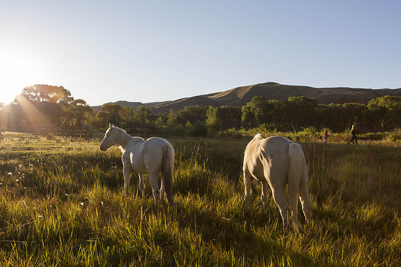 Lazy L & B Ranch Wyoming Horses at Sunrise by Wireflowers