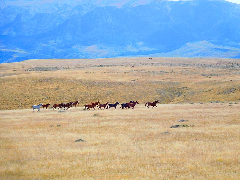Lazy L & B Ranch Wyoming Horses Galloping