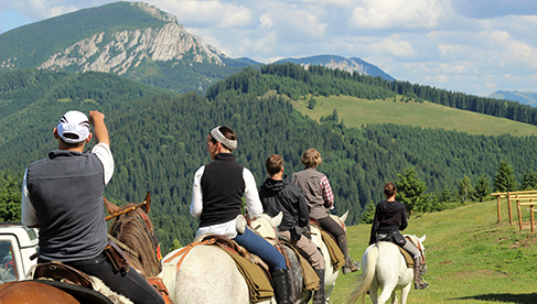 Hipparion Trail Riding Carpathian Mountains Romania