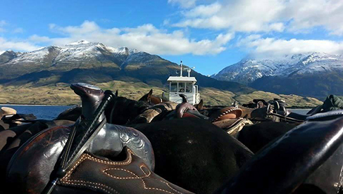 Barge trip across Lake Wanaka with the horses in New Zealand