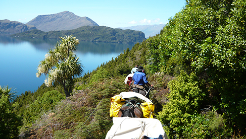 Riding through native bush on Twin Lakes Pack Trail with Adventure Horse Trekking New Zealand