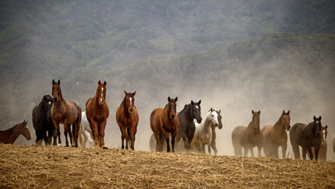 Alisal Dude Ranch California Horseback Riding Vacations