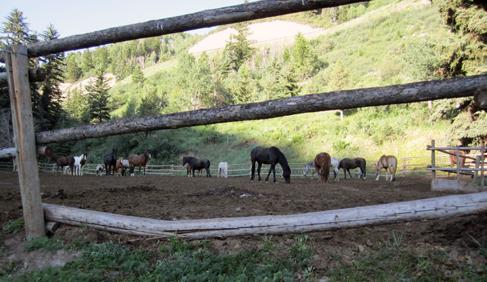 Bearcat Stables Colorado Equestrian Adventures