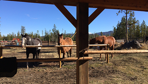 Big Creek Lodge Canada Horseback Riding Holidays