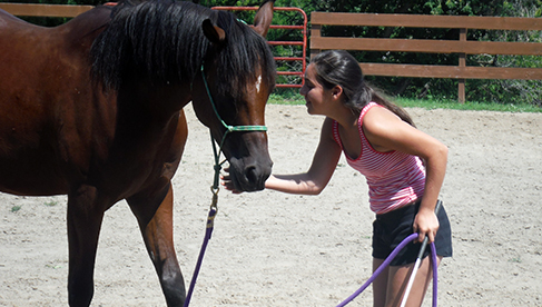 Black River Farm and Ranch Michigan Horseback Riding Camps