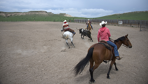 Colorado Working Ranch Vacations