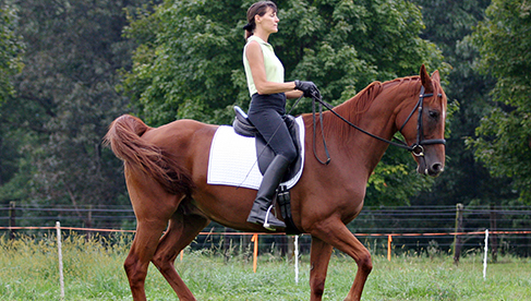 Classical Dressage Lessons Virginia