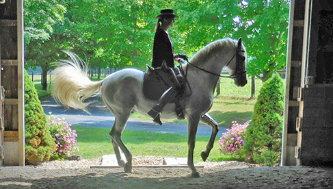 Classical Dressage Horseback Riding Holidays Virginia