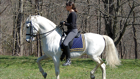 Classical Dressage Horseback Riding Vacation Virginia