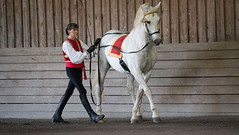 Classical Dressage Lessons Virginia