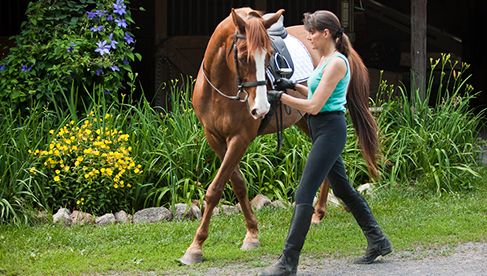 Classical Dressage Vacations Virginia