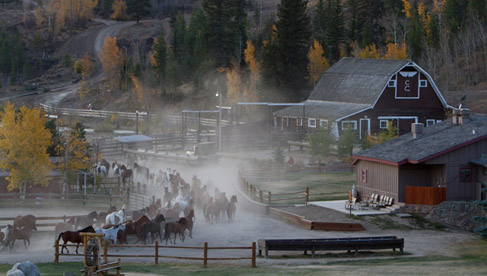 The herd of 200 horses gets jingled in to the corral each morning and then back out to pasture each day during the summer month.
