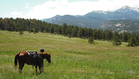 Cheley Colorado Horse Summer Sleepaway Camps