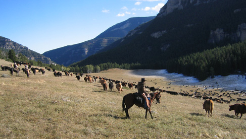 Doublerafter Cattle Drives
