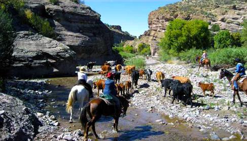Double E Ranch- New Mexico Dude Ranch