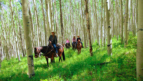 Elk Mountain Ranch Colorado Dude Ranches Family Reunions