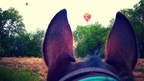 Enchantment Equitreks Balloon Fiesta Ride New Mexico Horse Vacations