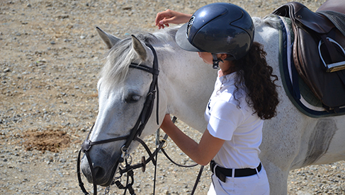 Oakwood Stables Ireland Adult Childrens Riding Holidays