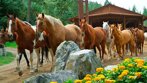 Flathead Lake Lodge Montana guest ranches