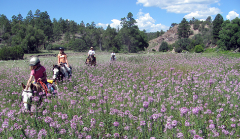 Rocky Mountain Bee Plants at Geronimo Trail Guest Ranch, New Mexico.