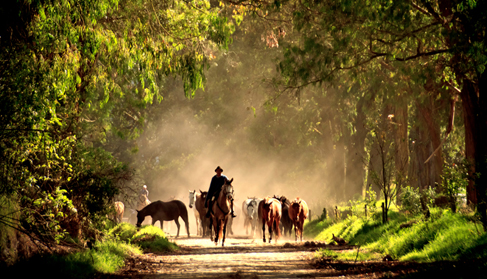 Horses coming in from the fields. Photo by Diego Toapanta at Hacienda Zuleta- Ecuador Riding Vacations
