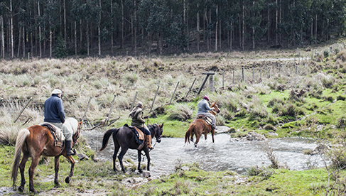 Water crossing on horseback in Uruguay at Haras Las Tordillas