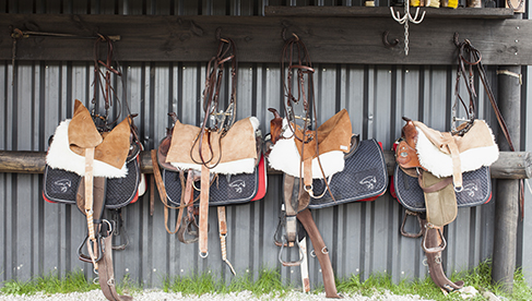 Tack for the Arabian horses at Haras Las Tordillas