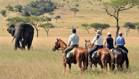 Viewing elephants on horse safaris with Offbeat Safaris