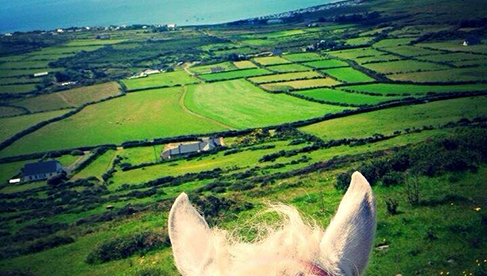 Longs Equestrian Vacations Dingle Peninsula Ireland