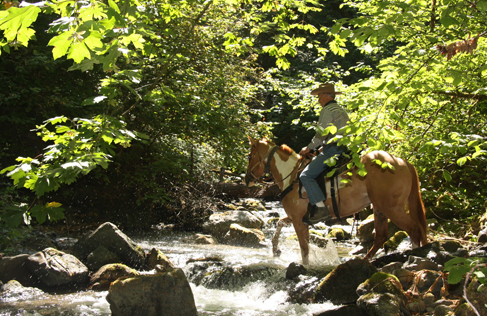Marble Mountain Ranch horse ride creek crossing, a California Guest Ranch Vacation