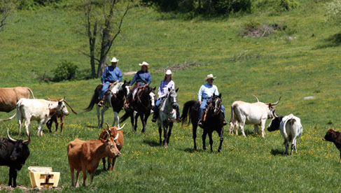 Trail ride across rivers to Paradise Valley at Marriott Ranch, Virginia Hunt Country