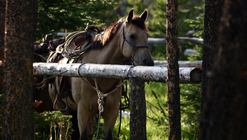 Horseback Riding Montana Holidays for Summer