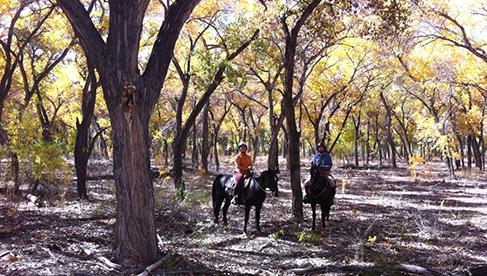 New Mexico Equestrian Holidays
