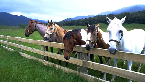 Poronui New Zealand Horse Trekking
