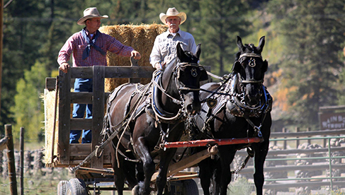 Rainbow Trout Ranch Fly Fishing and Horseback Riding Ranches
