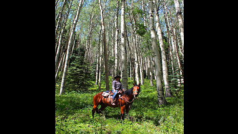 Rainbow Trout Ranch Trail Riding Tours