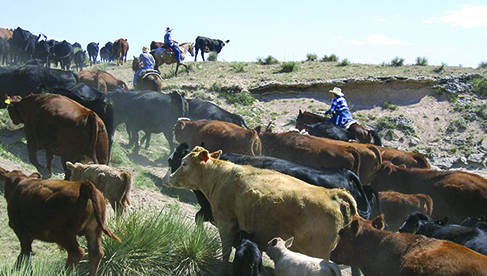 Guest Ranches with Cattle Drives