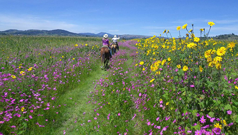 Mexico Ranch Vacations and Mexico Riding Holidays horseback riding wildflowers