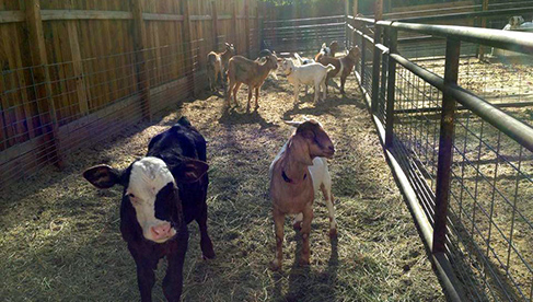 Rankin Ranch California Ranch Vacation Horse Camps