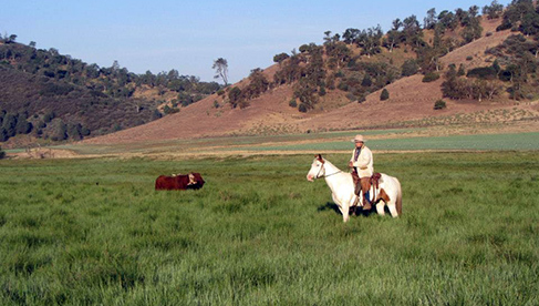 Rankin Ranch California Horseback Riding Camps Pool