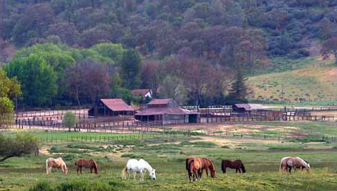 Horses grazing in the meadow at Rankin Ranch, a California dude ranch