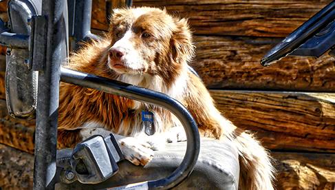 Dude ranch dog at Rawah Ranch