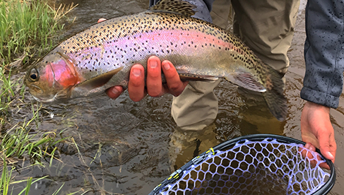 Fly Fishing for trout Rawah Ranch Colorado