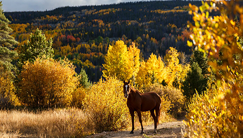 Rawah Guest Ranch Colorado Horses