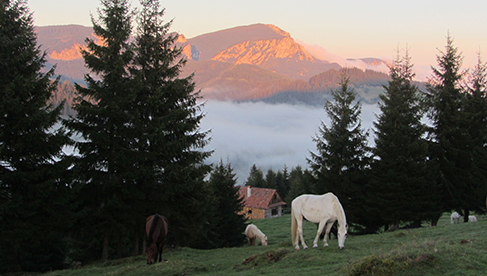 Romania Equestrian Vacations