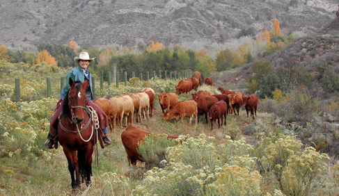 Sylvan Dale Guest Ranch Colorado dude ranches cattle drives