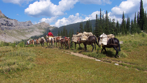 A Lazy H Outfitters Montana Summer Mule Pack Train